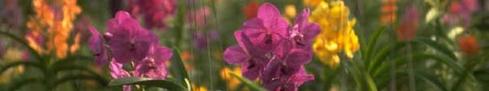 aboutus-flowers
